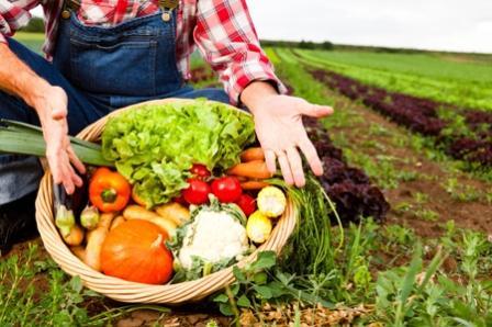 pertanian organik-magister agribisnis uma