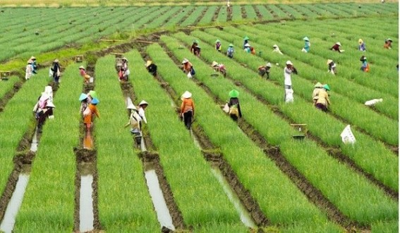 pertanian berkelanjutan-MA UMA