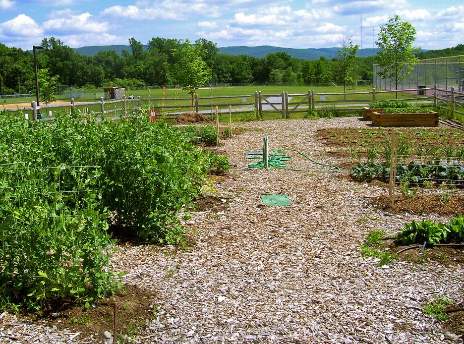 organic garden - uma